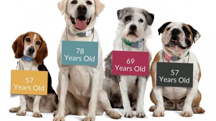 Apie gyvūno senatvę