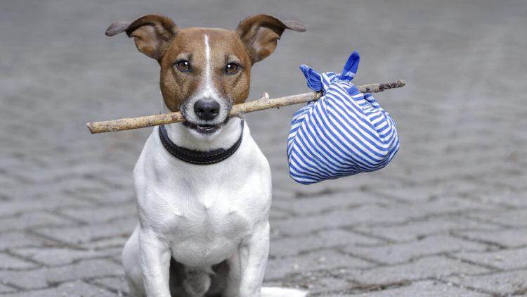 Ką turite daryti dingus jūsų gyvūnui