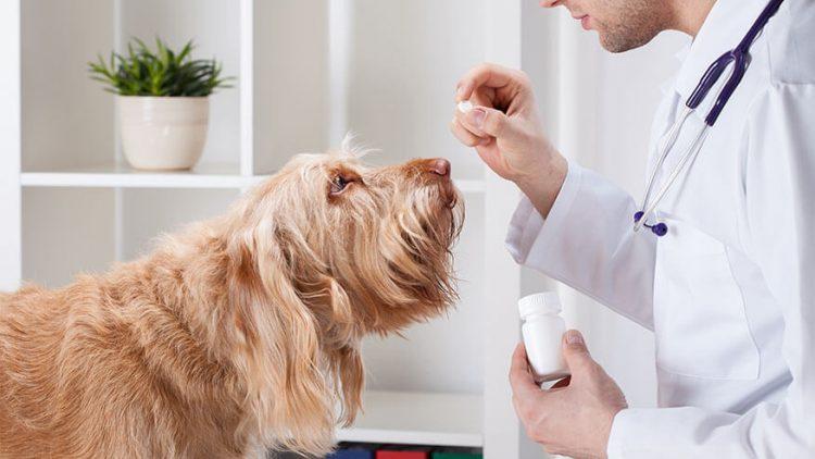 Kaip duoti vaistus šuniui