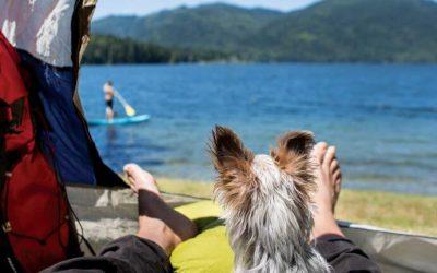 Rūpinimasis šunimi gamtoje: galimi pavojai