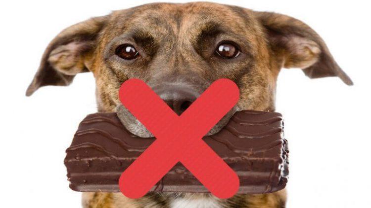 Kokie produktai šunims kenksmingi