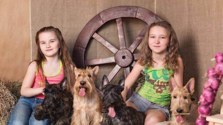 10 priežasčių įsigyti šunį