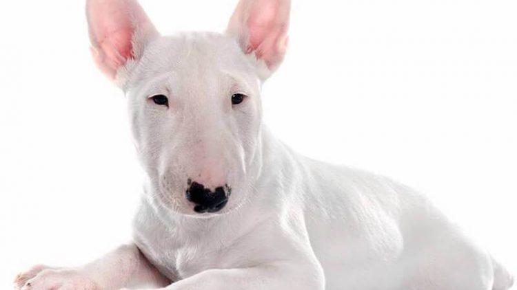 9 Įdomūs faktai apie šunis