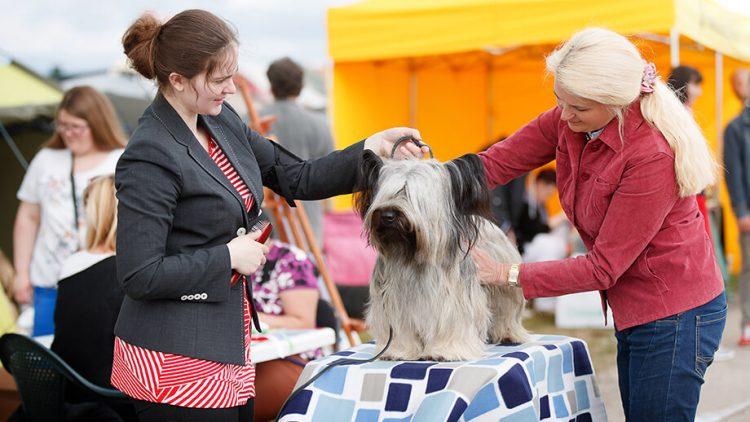 Debiutas šunų parodoje