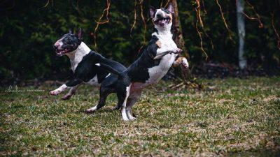 Instrukcija. Kaip elgtis įmynus į šuns kaką?