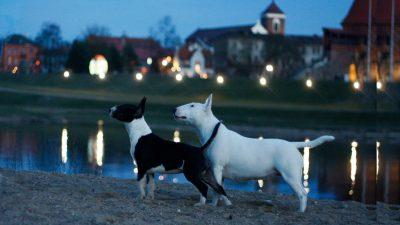 Kaunas tampa vis draugiškesniu miestu keturkojams draugams